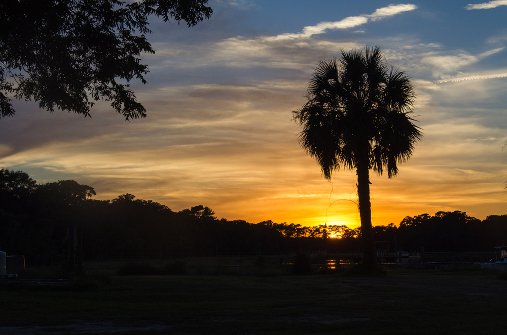 Gorgeous sunset and palmetto silhouette.