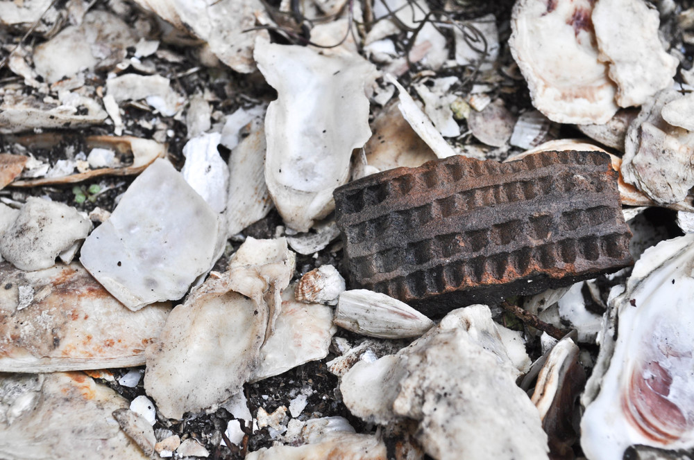 Piece of pottery among oyster shells.