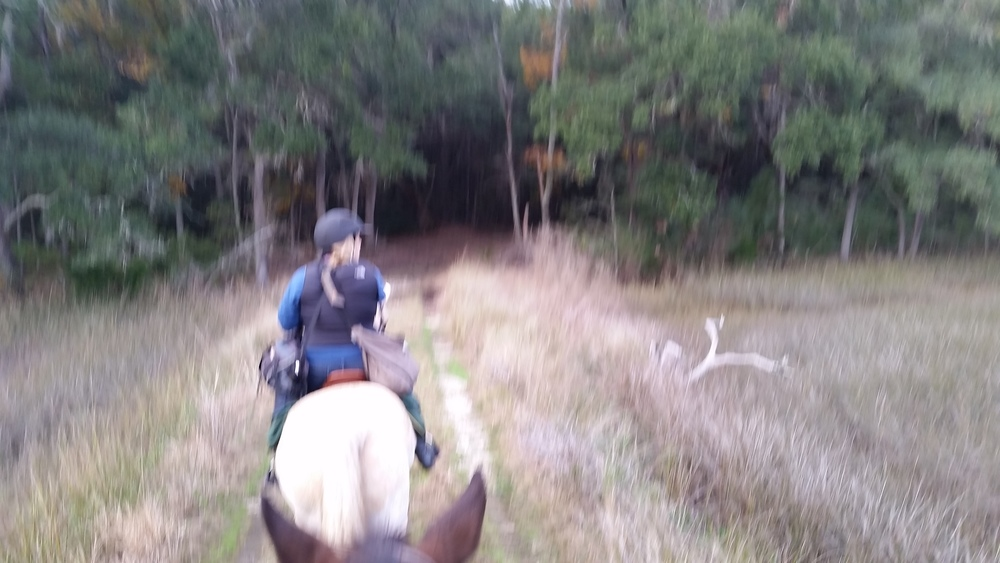 Blurry photo of horse, rider and trail.