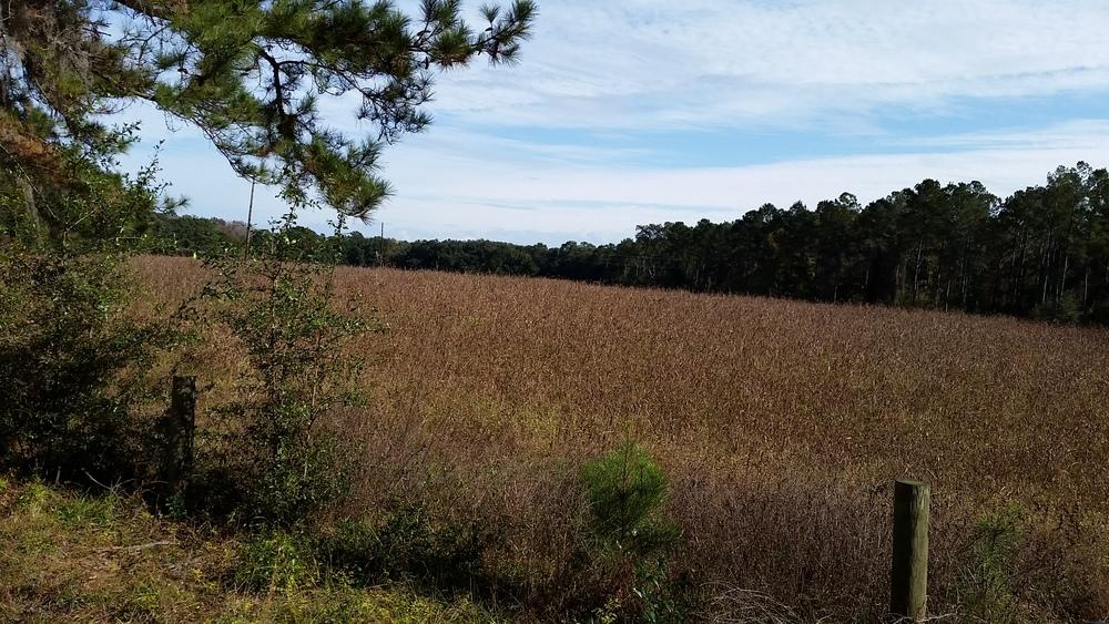 Field off of Jenkins Hill Rd.