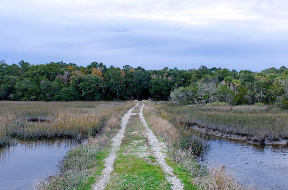 Rough road through Botany Bay Plantation.