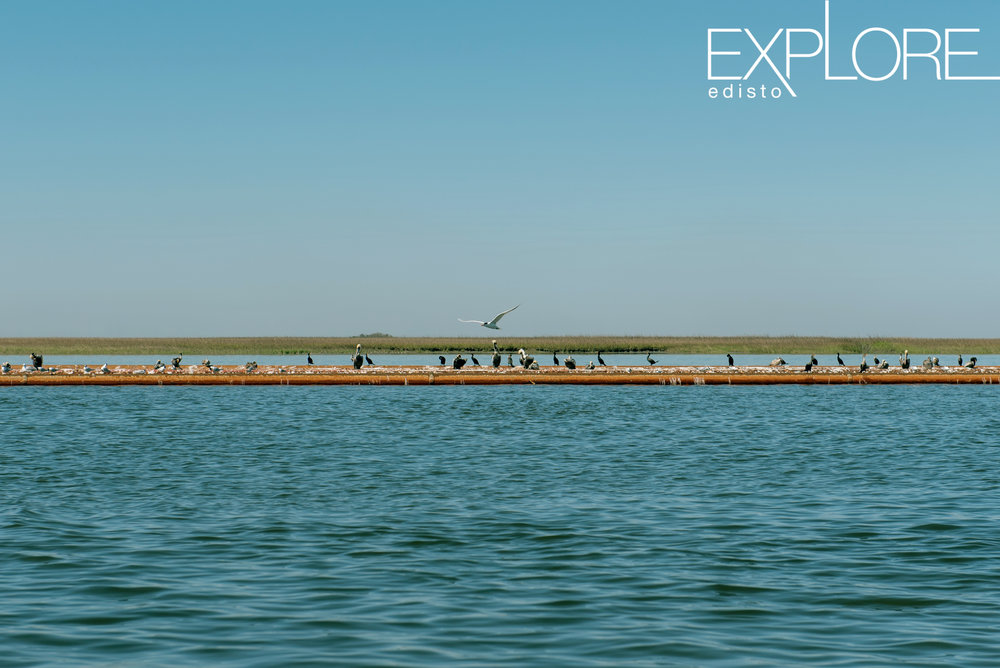 Many birds perched on a pipe over the water.