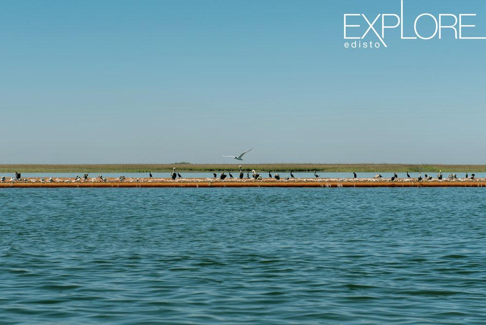 Beach_Nourishment-0745.jpg