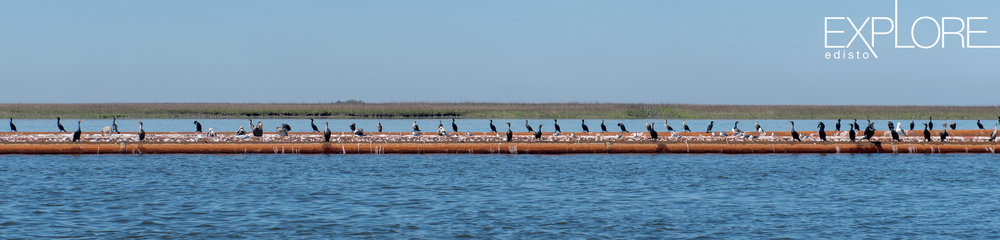 Many birds resting on a barge in the ocean.