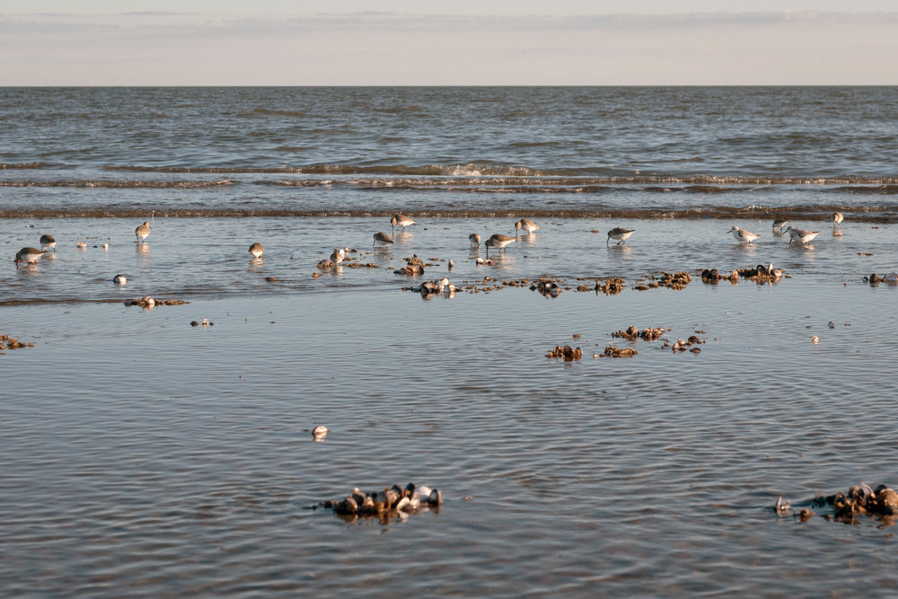 Otter_Island_Camping-6637.jpg