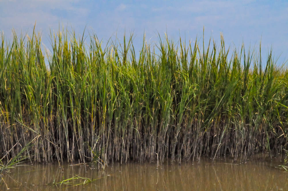 Marsh-0469.jpg