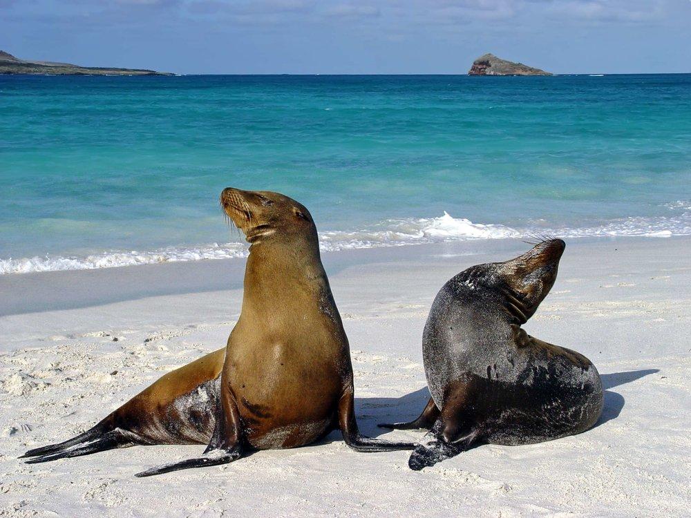 sea lions on beach.jpg