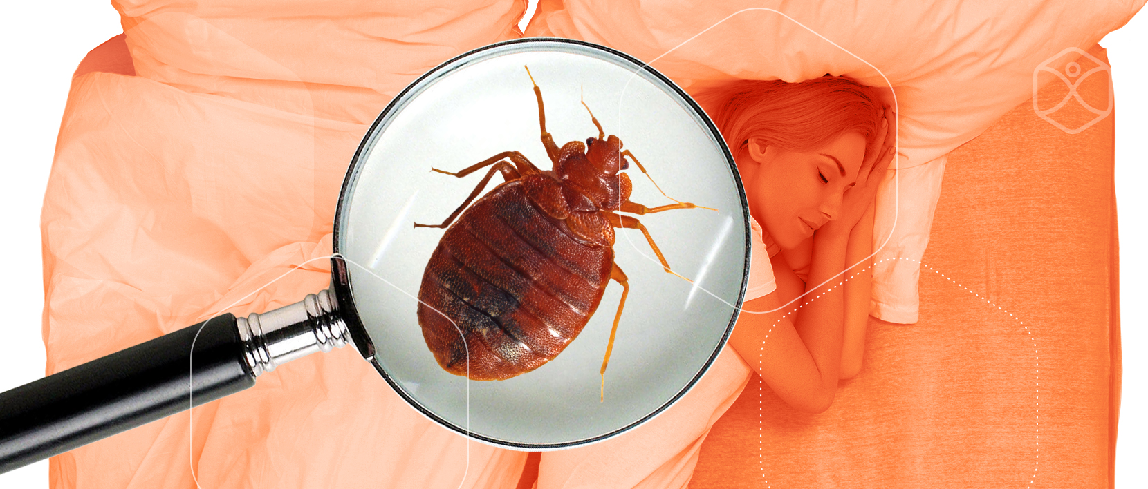 Sleep Tight Dont Let The Bed Bugs Bite Metro Integrative Pharmacy