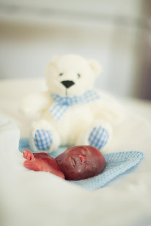Teddy-4278.jpg