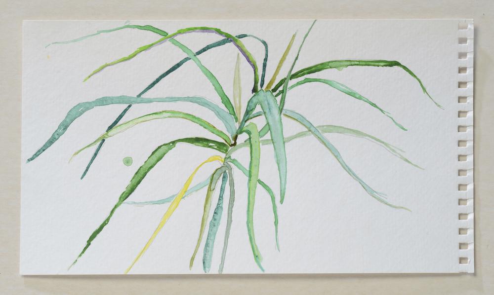 Green Grow