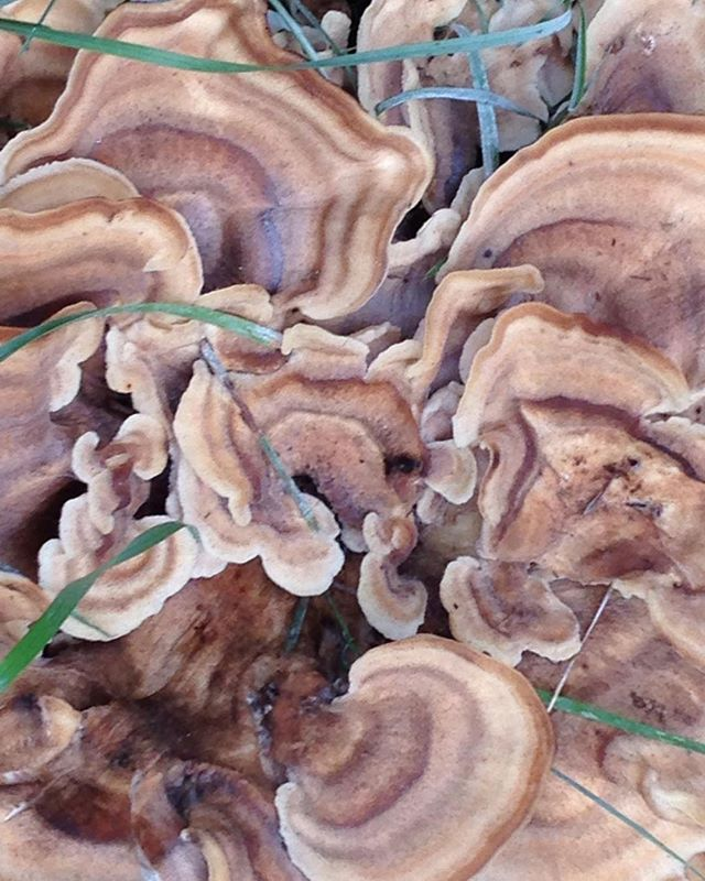 almost looks like agate, but it's not! from a walk outside Boston #mushrooms#fungi#naturedistilled