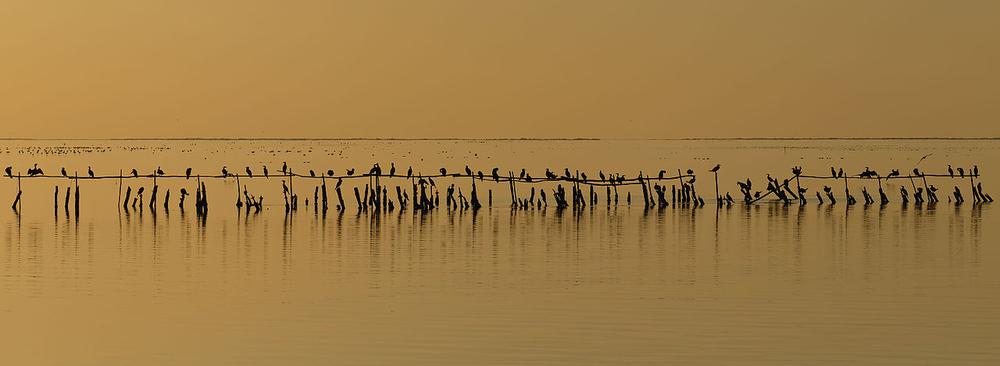 ヴァカレ池の夕暮れに浮かぶ鵜の群れ、フランスのデルタ・デュ・ロン・ ユネスコエコパークにて 。Ddeveze が撮影。freely licensed under CC BY-SA 3.0.