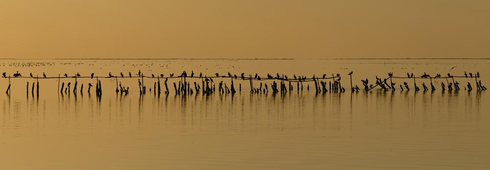Cormoranes al atardecer en un estanque de      Vaccarès   , parte de la Reserva de la Biósfera del Delta du Rhone, Francia.     Foto por Ddeveze, publicada bajo licencia libre      CC-by-SA 3.0