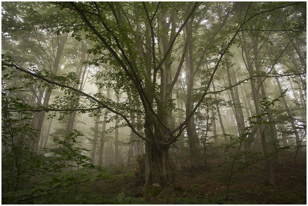 <b>Carpathian Biosphere Reserve<br>  Ukraine</b><br><br>   Billchik