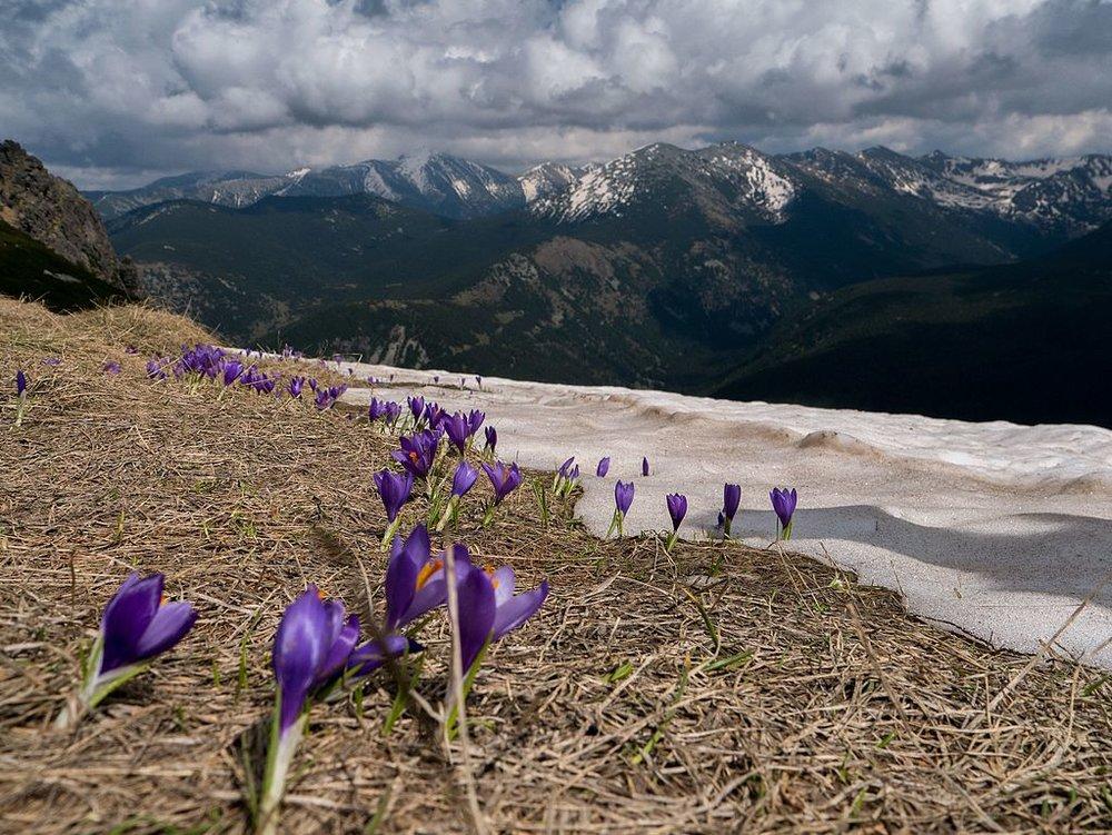 <b>Parangalitza Biosphere Reserve<br>  Bulgaria</b><br><br>  Иван Стефанов Коев