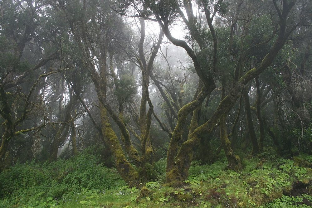 Isla de El Hierro Biosphere Reserve<br>Spain