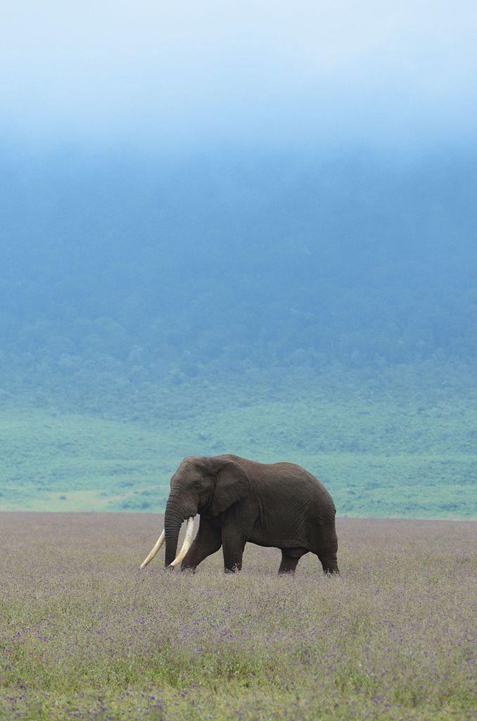 Serengeti-Ngorongoro Biosphere Reserve<br>Tanzania