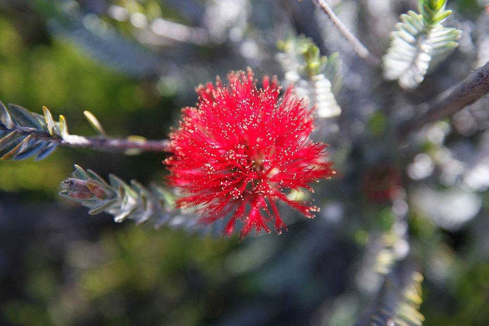 Fitzgerald River Biosphere Reserve<br>Australia