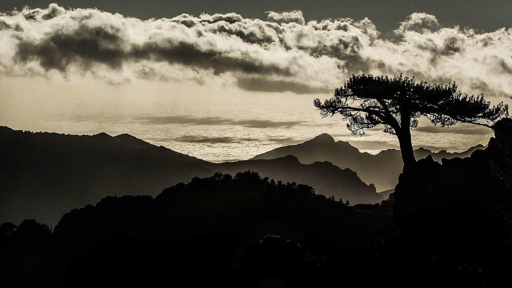 Le_vieil_arbre_en_Corse.jpg