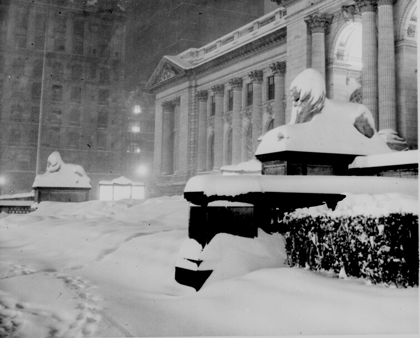 lions-snow