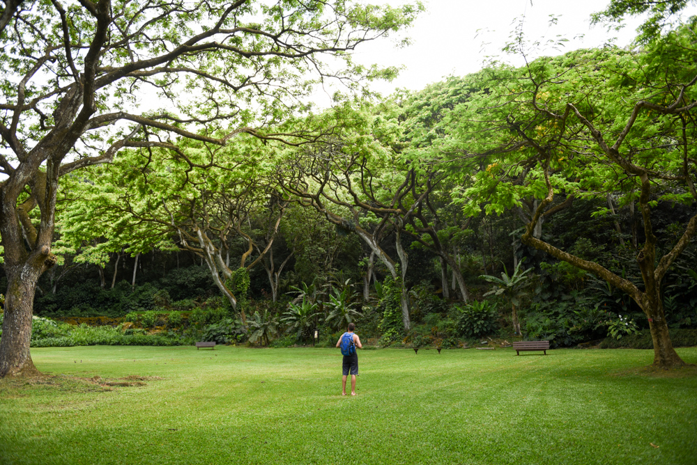 2017_05_31_Waimea_Valley_5.jpg