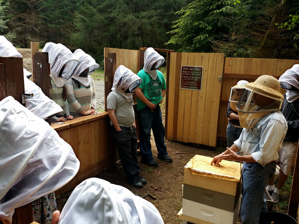 Lauren Anderson's A&A learning about bee keeping
