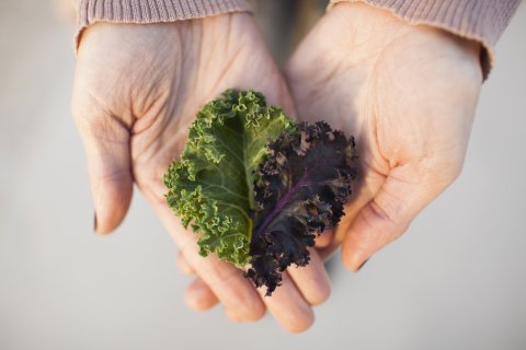 kale history, varieties & tips - wholefoodsmarket.com, 2016
