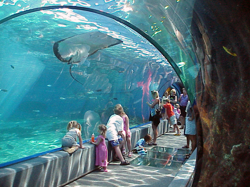 Aquariums & Sea Life Parks