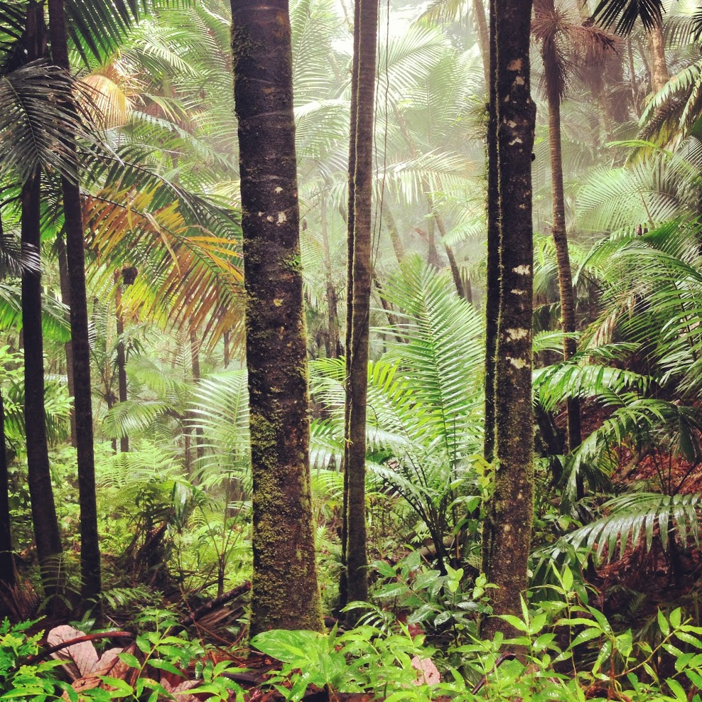 The day we spent in the El Yunque rainforest in Puerto Rico was our favorite experience on the island.