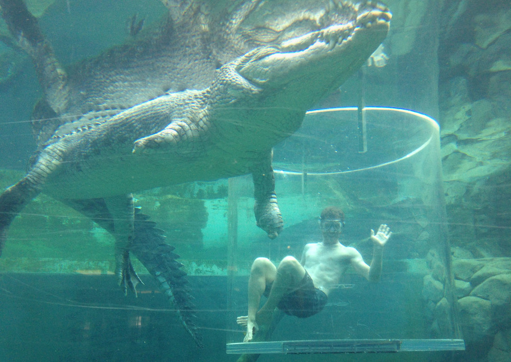 "The Crocosaurus Cove ""Cage of Death"""