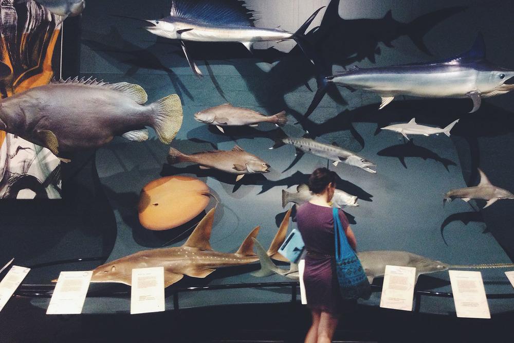 darwin-australia-museum-evolution-fish-science1.jpg