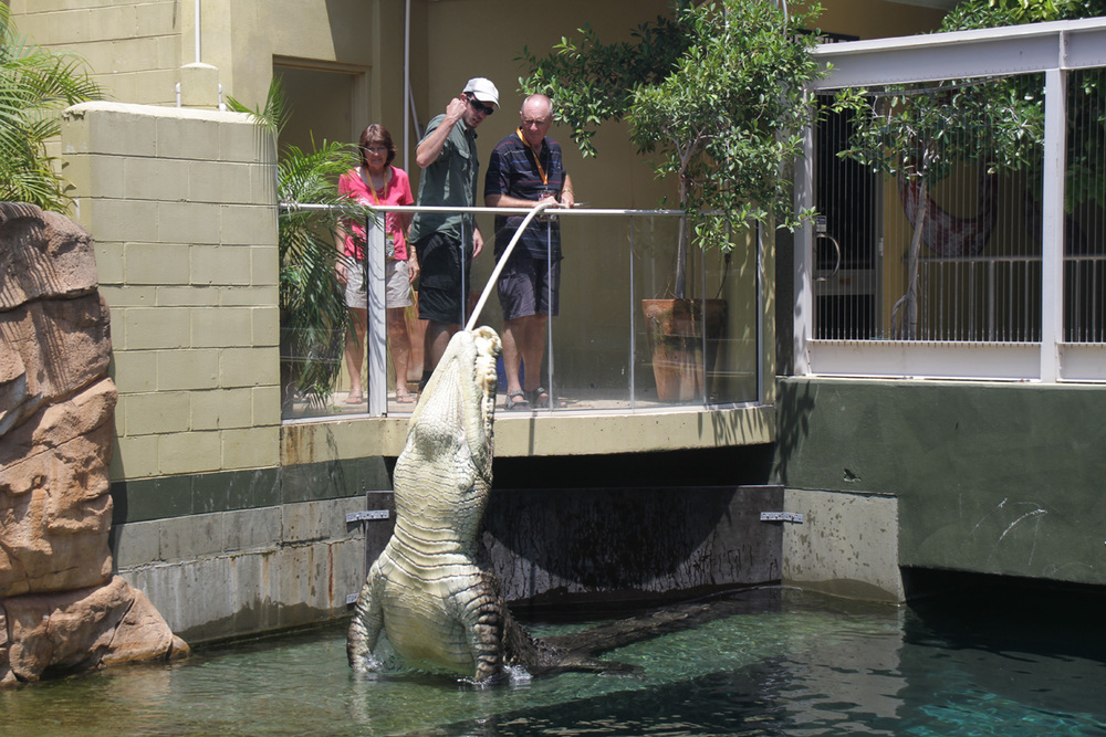darwin-crocodile-feeding.jpg