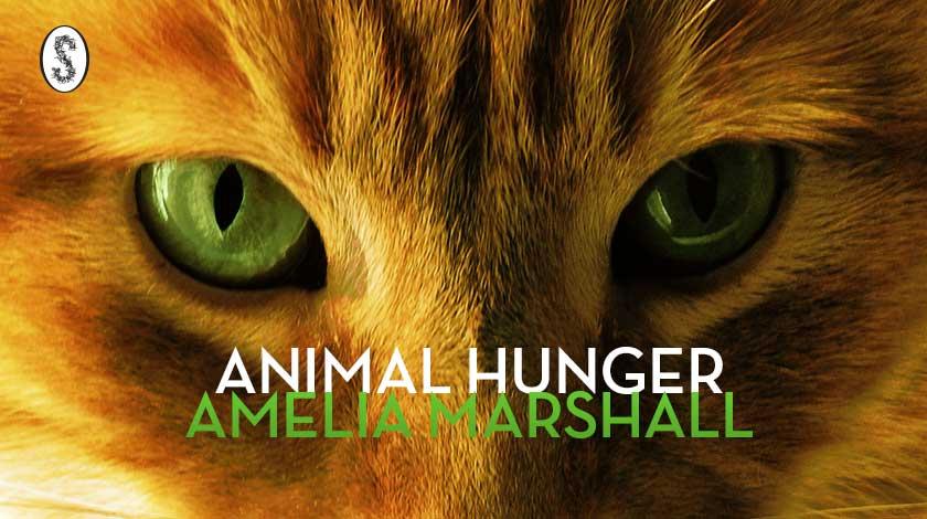animalhungerbanner-v2