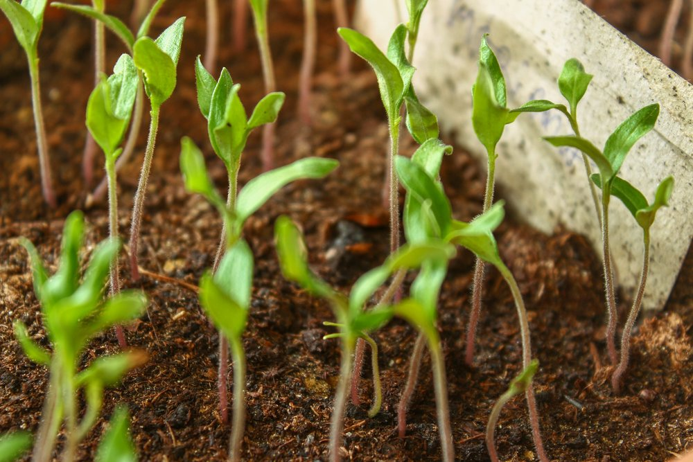 CSA Farmers need our commitment now to start seedlings for us...