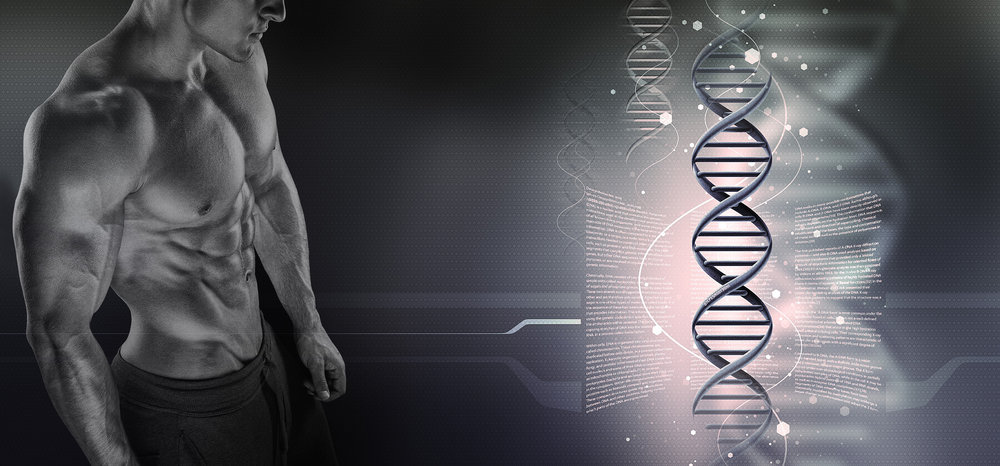 Muscle Morsels   The Home of Cutting Edge Research & Physiological Breakthroughs      Read Blog