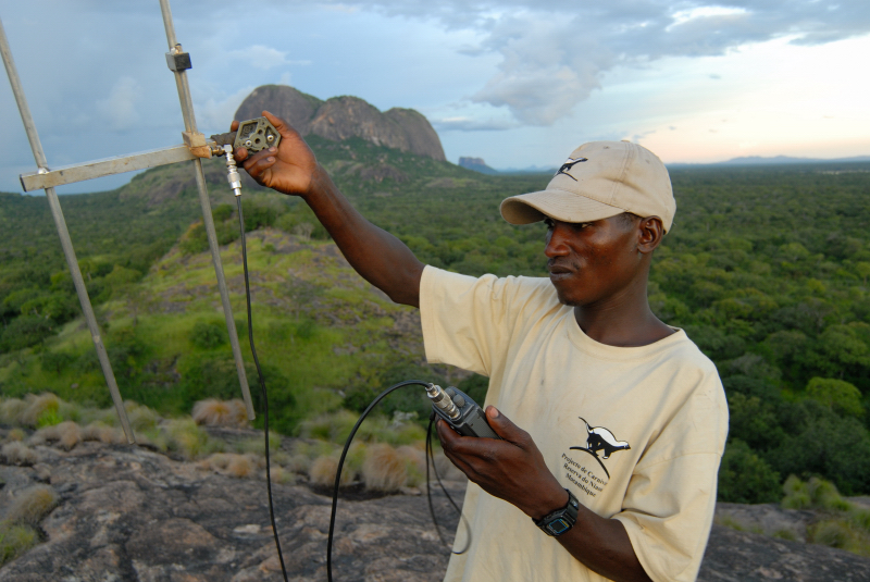 Radio tracking lions in Niassa. PC: Colleen Begg, Niassa Lion Project