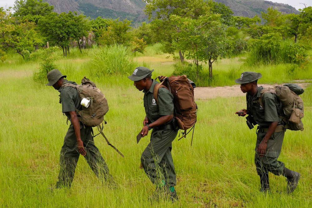 Antipoaching scouts, Niassa Lion Project