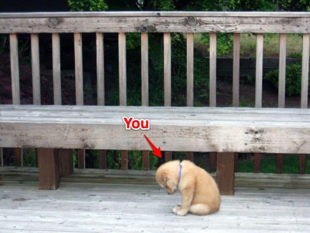 Here's you, aka sad puppy.