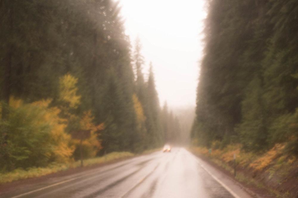 CARLHEINZblurrywoodlandroad.jpg