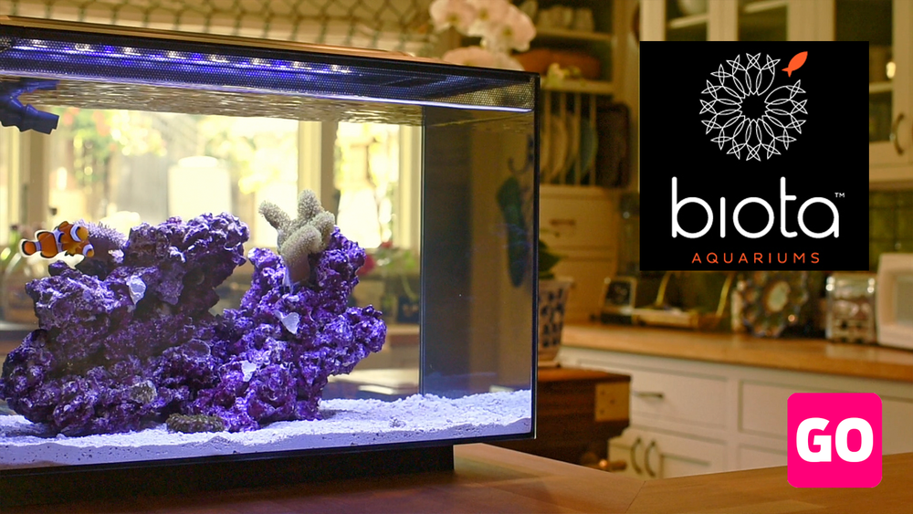 Biota Aquariums - $116,839 • 345% FundedIndiegogo • 2016