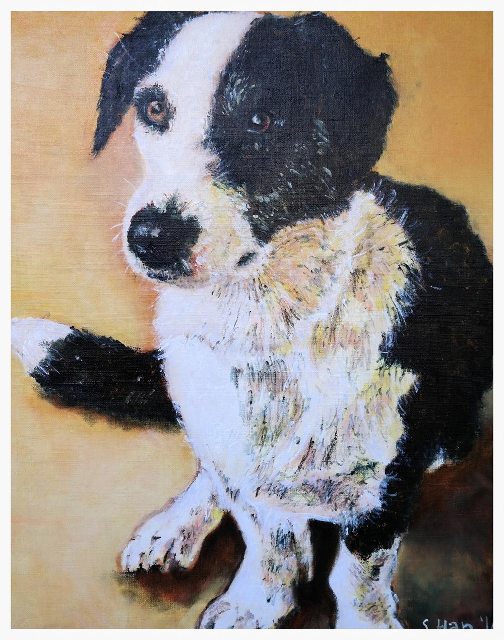 Dog Portrait - Chewie at 1.5 yrs