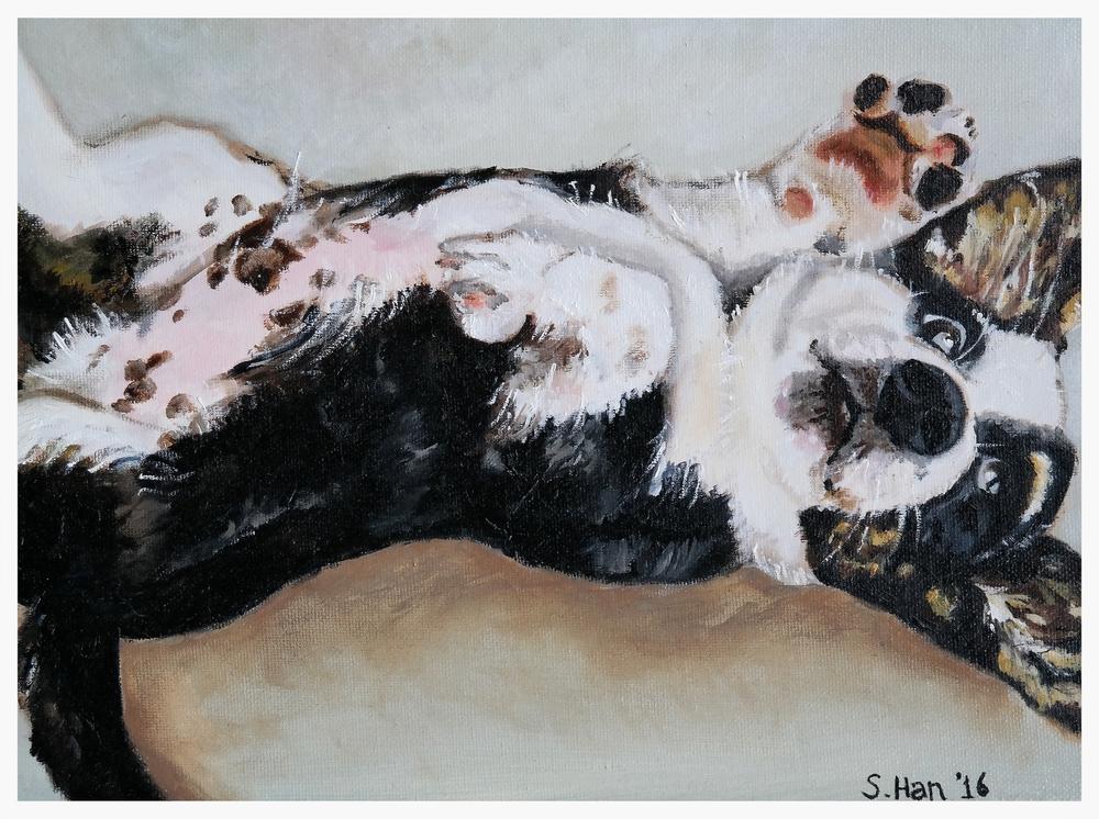 Dog Portrait - Chewie at 3 months