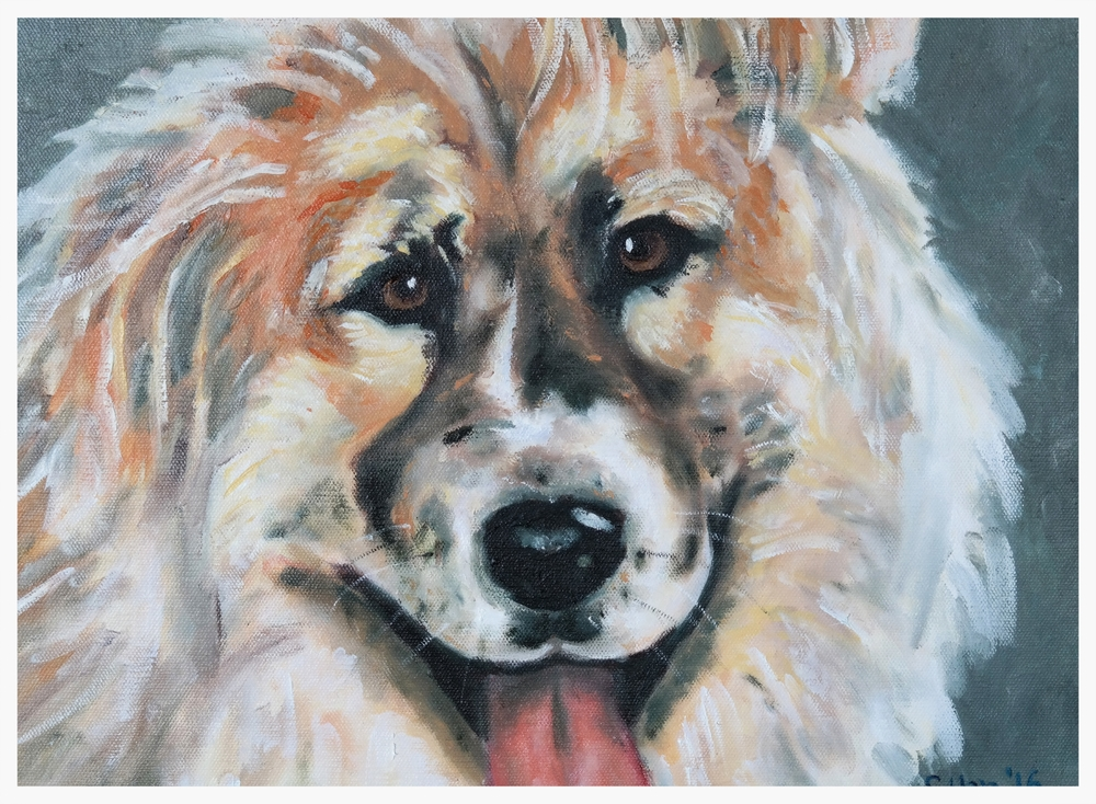 Dog Portrait - Petey