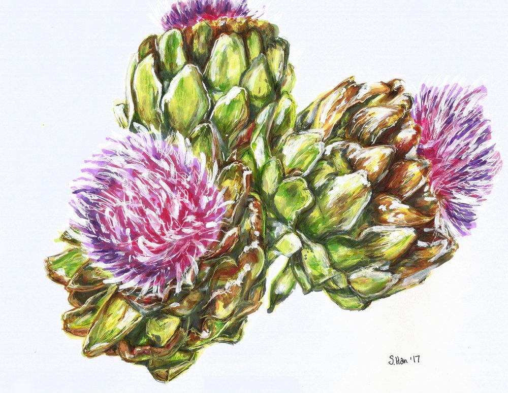 Flowering Artichokes - drawing