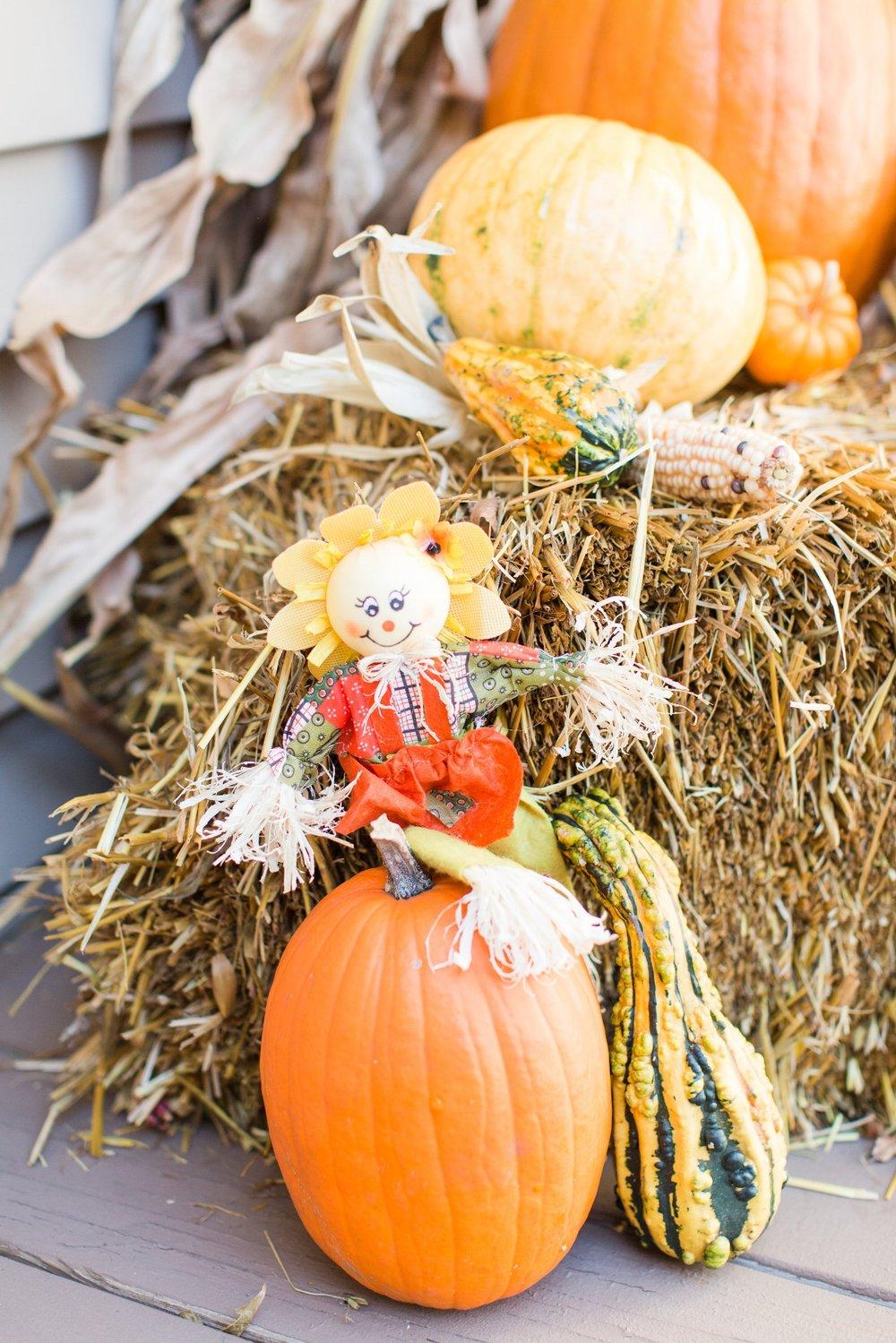 pumpkin |scarecrow |fall decor