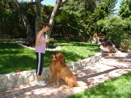 Adelita and Bloodhounds 3 - June 08.jpg