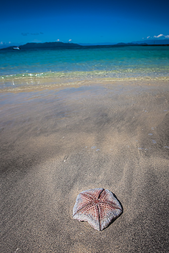 Starfish on the beach in madagascar