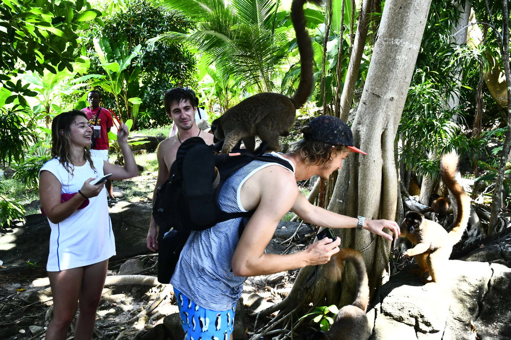 The Lemurs of Nosy Iranja Madagascar playing with tourists