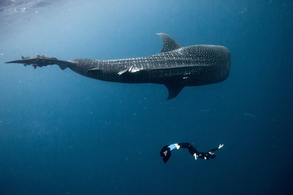 Explore Underwater - Diving and Scuba Diving in Nosy Be, Madagascar
