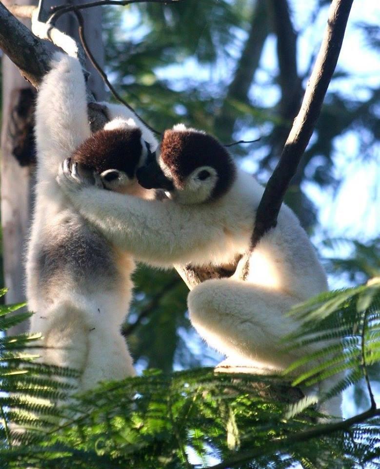 Nosy Komba, Madagascar - Shopping and Lemurs